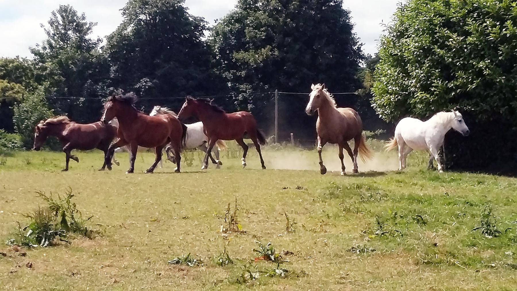 Chevaux Centre Equestre